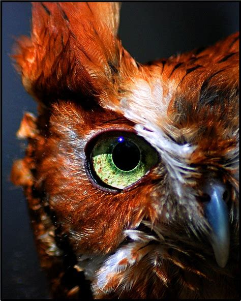 Gw Se F Green Owl amazing owl eye by papaj o w l s ugglor och inspiration