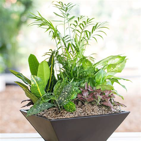 where to put plants in house indoor house plant arrangements