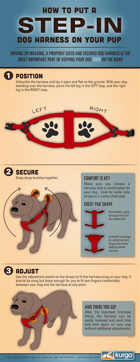 how to put on harness how to properly put on a harness mybrownnewfies