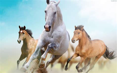 horses gallop   desktop wallpaperscom