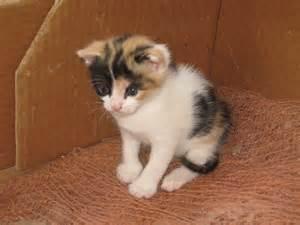 file 3 week old kitten 1 jpg