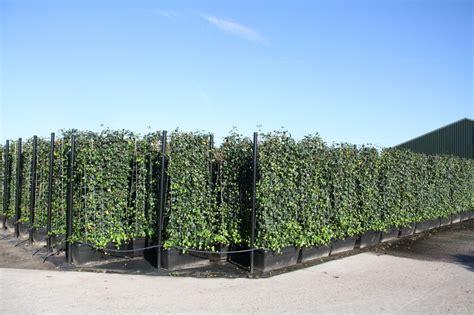 Pflanzenspecial Heckenelemente Exklusivit 228 T Und Sichtschutz Bambus Landi Garten Sichtschutz Holz Garten Und