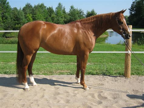 for sale horses missy san tari finished reining horse for sale reining