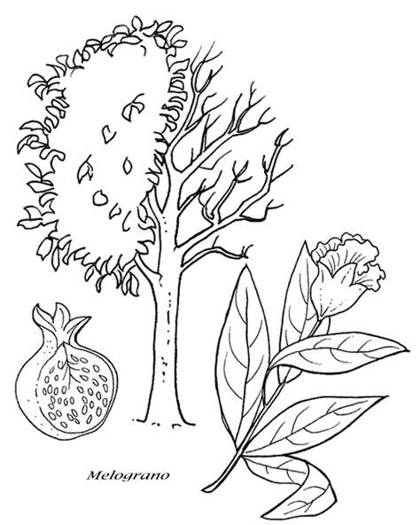 disegni di piante e fiori disegni da colorare alberi e piante disegni per bambini