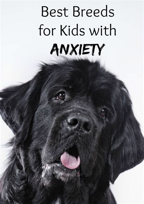 best dogs for therapy 2445 best images about breeds on best breeds therapy dogs and