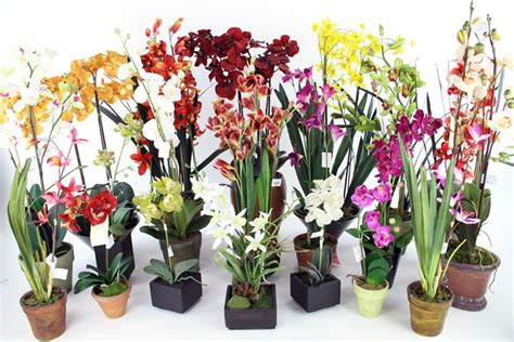 vaso per orchidea phalaenopsis vaso per orchidea orchidee vasi adatti per orchidee