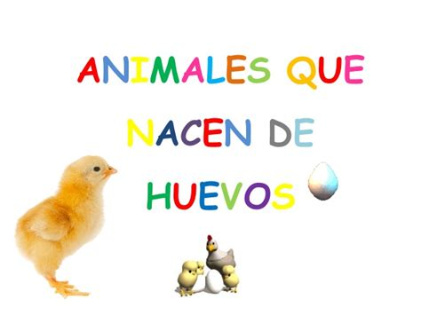 imagenes de animales que nacen del huevo animales que nacen de huevos