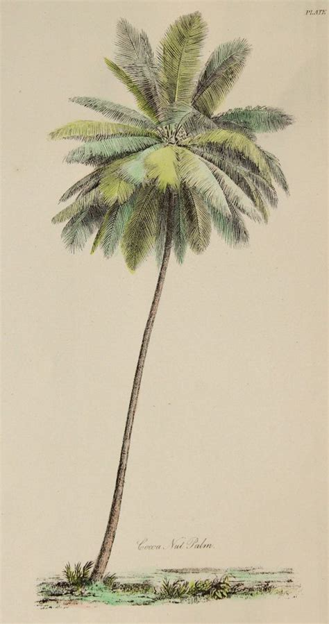 25 best ideas about palm vintage palm tree illustration www imgkid the