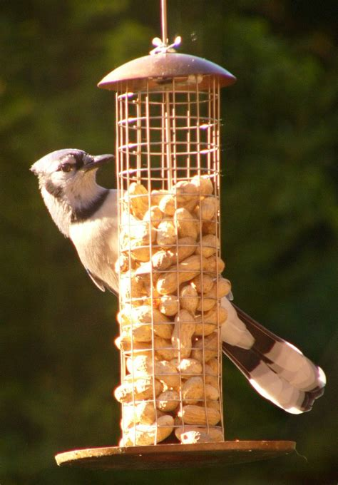 peanut bird feeders bird cages