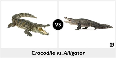 Difference between Crocodile and Alligator