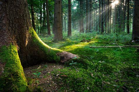 ufficio forestale giornata mondiale ambiente arriva l ufficio salva