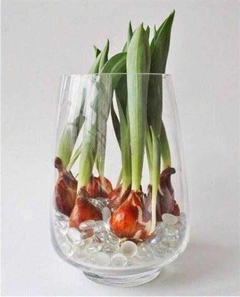 Tulpen Zu Hause Ganzj 228 Hrig Pflanzen Dekoking