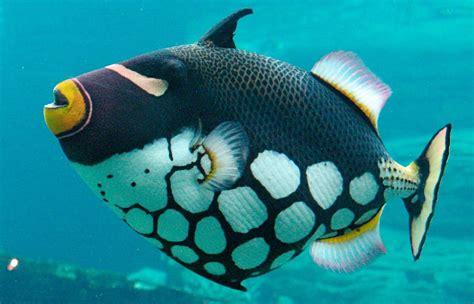imagenes de jardines acuaticos animales acuaticos exoticos m 225 s bellos desc 250 brelos