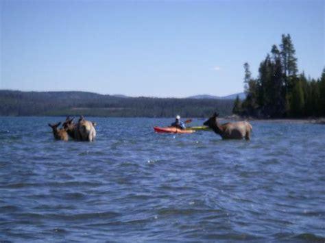 lake yellowstone boat tours yellowstone geyser kayak tours yellowstone national park