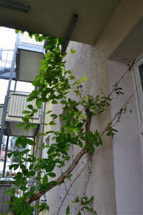Balkon Selbst Gestalten by Balkon Gestalten Sch 246 Ner Balkon
