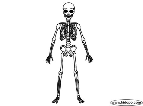 skeletal whole body coloring pages