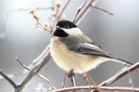 top ten birds that winter in canada earth rangers wild
