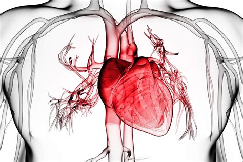 The Heartbreaker by What You Should About Pericarditis