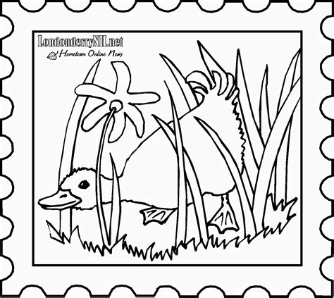 duck in the rain colouring page kindergarten duck in the rain colouring page kindergarten