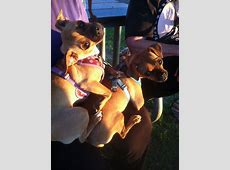 Zoe's Friends Animal Rescue - HOORAY! I'M ADOPTED!276 ... Royal Jelly