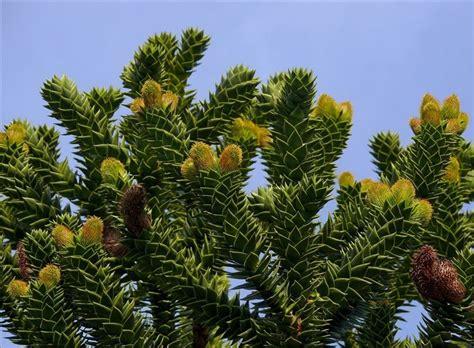 nomi di piante da giardino piante da esterno sempreverdi piante da giardino