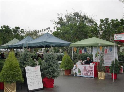 want to make your christmas greener rent a live tree