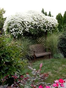 Evergreen Climbing Plants For Trellis - clematis sweet autumn garden housecalls