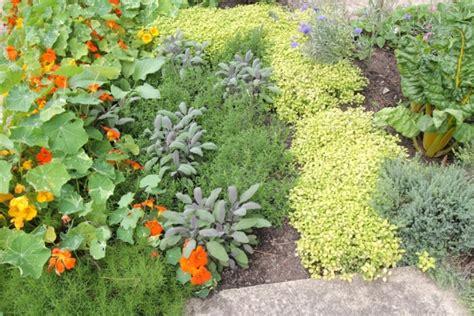 herb garden basics herb garden basics organic gardener magazine australia