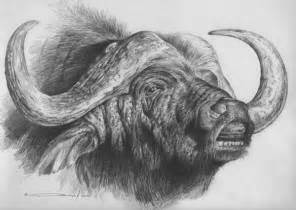 cape buffalo pencil study by denismayerjr on deviantart