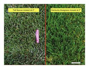 vegetative identification of common turfgrasses in the pacific northw