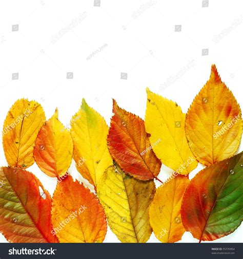 color mixtures variety of different color mixtures in autumnal cherry