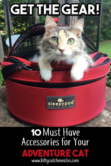 Are Cats The New Must Accessory by Get The Gear 10 Must Accessories For Your Adventure