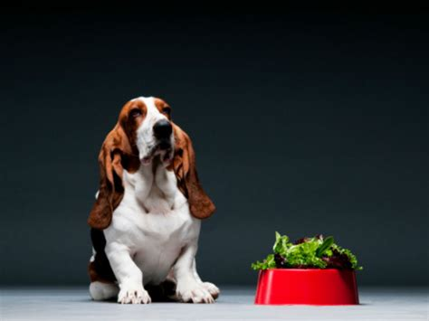 can dogs spinach can dogs eat spinach american kennel club