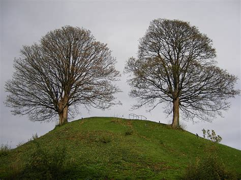 wind concern rustles  trees observer