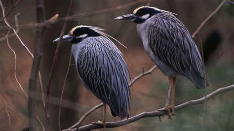 backyard birds of virginia backyard bird count begins february 17 human world
