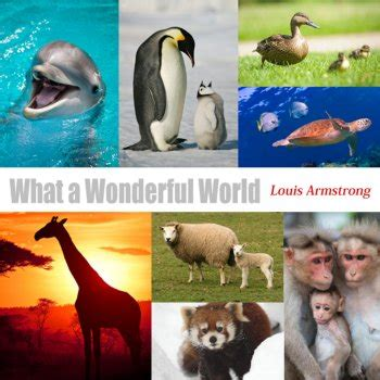 testo what a wonderful world what a wonderful world traduzione louis armstrong