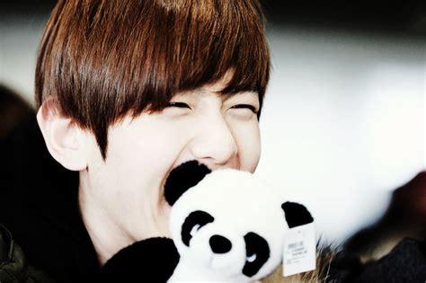 wallpaper cute exo dont miss baekhyun with cute panda doll hd wallpaper hd