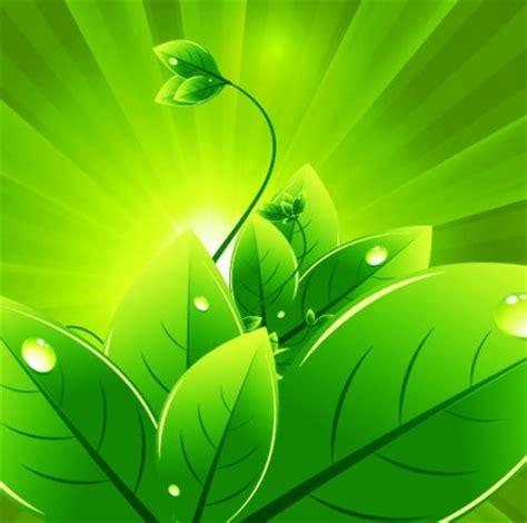 wallpaper vector daun vektor latar belakang dengan daun hijau vector latar