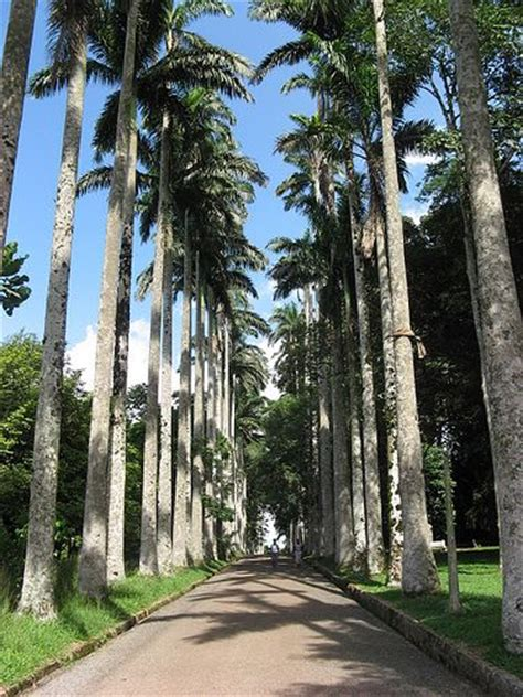Aburi Botanical Gardens Aburi Botanical Garden Accra Gardens And Botanical Gardens