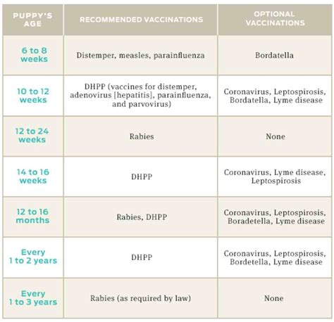 puppy vet schedule puppy vaccine schedule great of dogs