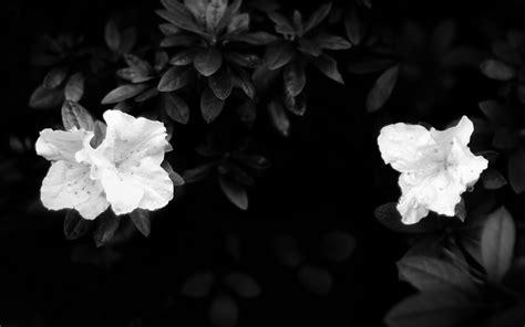 Eblack Flower black flower wallpaper 1920x1200 83278