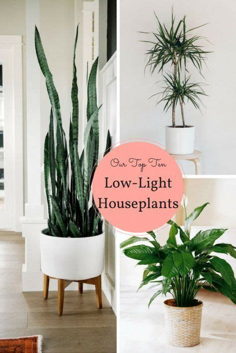 houseplants that don t need sunlight best 20 low light houseplants ideas on pinterest