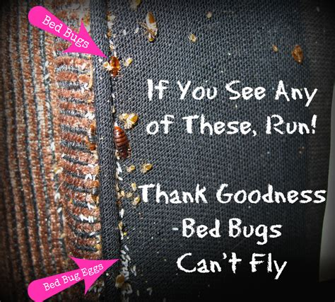 Car Upholstery San Jose 3 Easy Steps To Keep Bed Bugs Out Of Your Up Cycle Project
