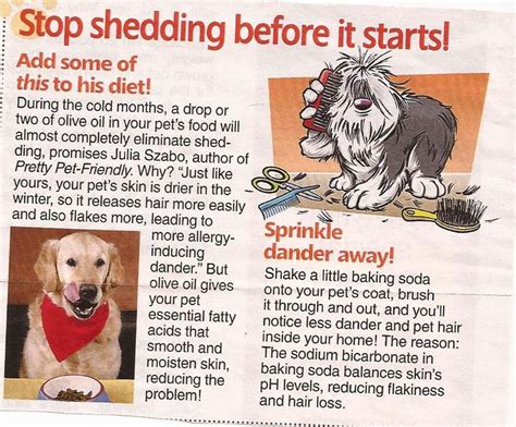 how to stop shedding home remedy 25 best ideas about shedding on non shedding cats shedding