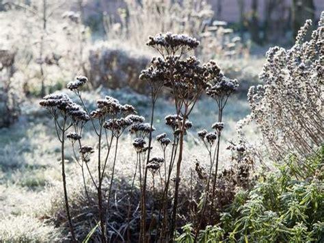 garten im mã rz pflanzen pflanzen auch im winter regelm 228 223 ig gie 223 en