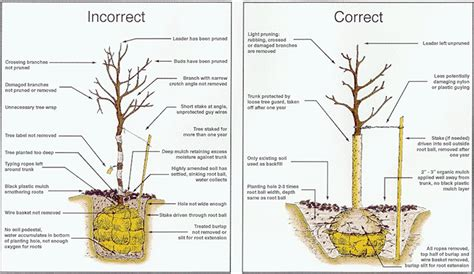 think spring plant shade trees now for a cool summer