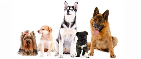 dog grooming grooming different dog breeds learn about dog coat types
