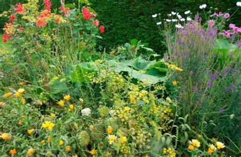 perennial garden vegetables top 10 perennial ornamental vegetables permaculture magazine
