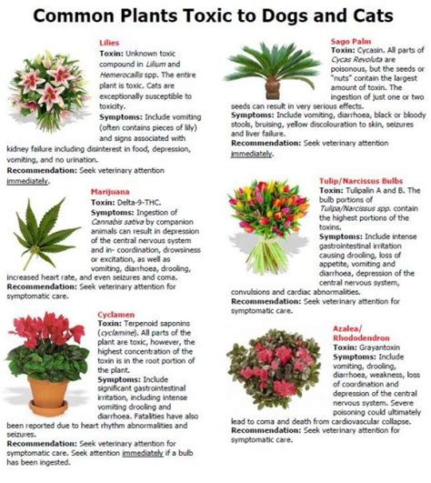 what plants are poisonous to dogs pet safety for summer inside and out huffpost