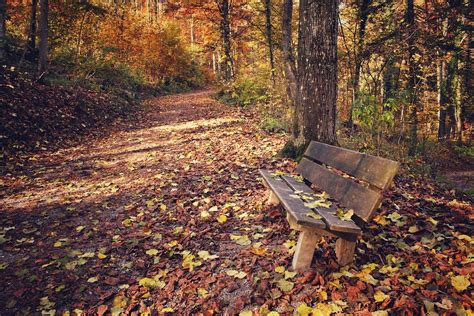 autumn park bench free photo park park bench leaves leaf free image on
